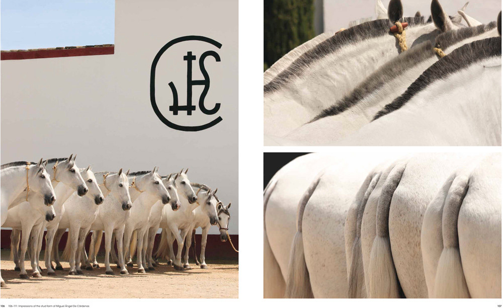 Buch - Andalusians and Lusitanos - Iberian Horses