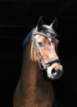 Fotografie, Tiere, Pferd, Werbeagentur r2 Ravenstein, Verden