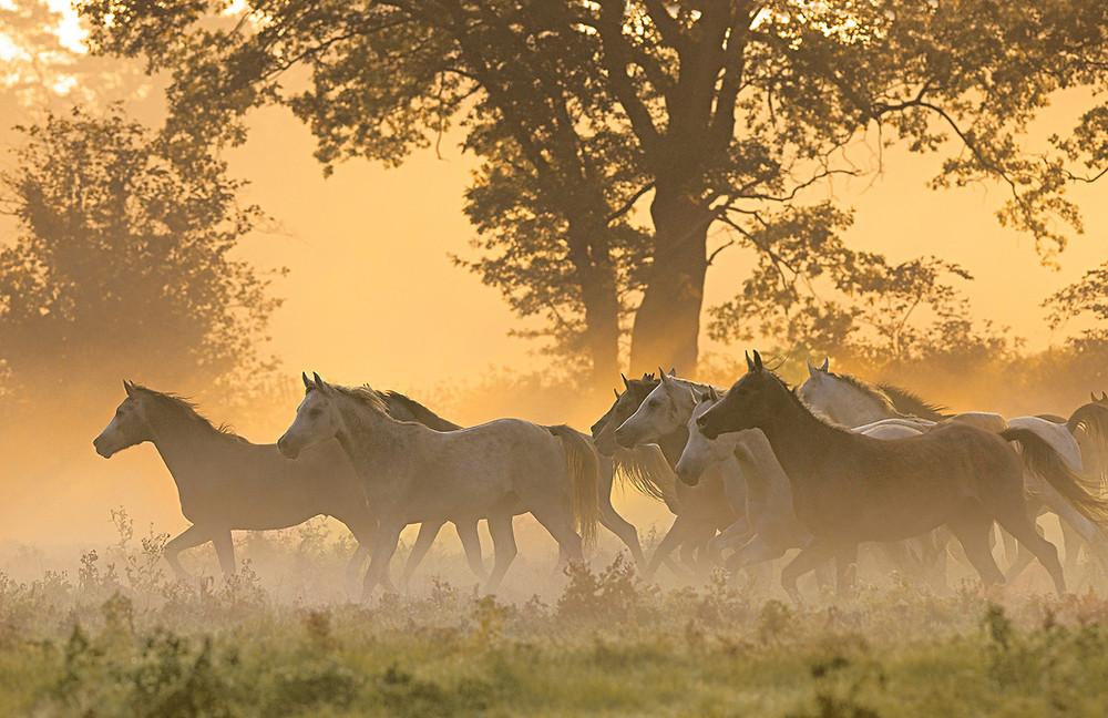Fototipp Herde im Sonnenaufgang