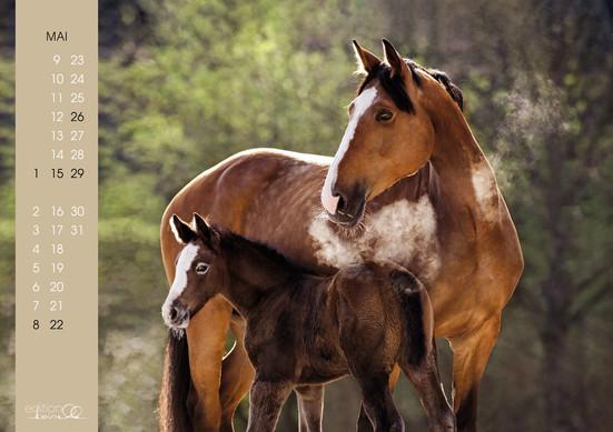 Kalender Pferdeliebe 20226.jpg
