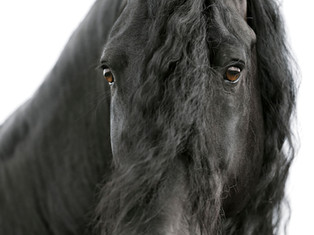 Bildergalerie Schwarze Perlen Frieslands