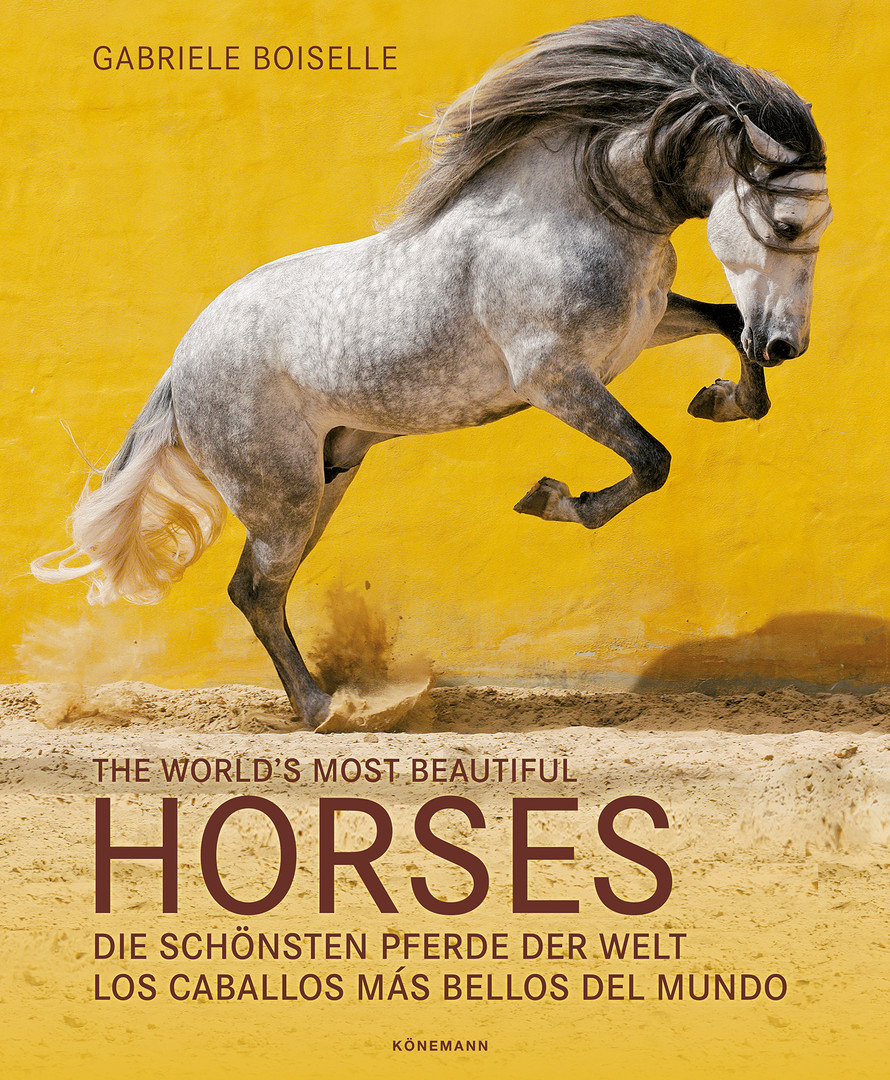 The world´s most beautiful Horses