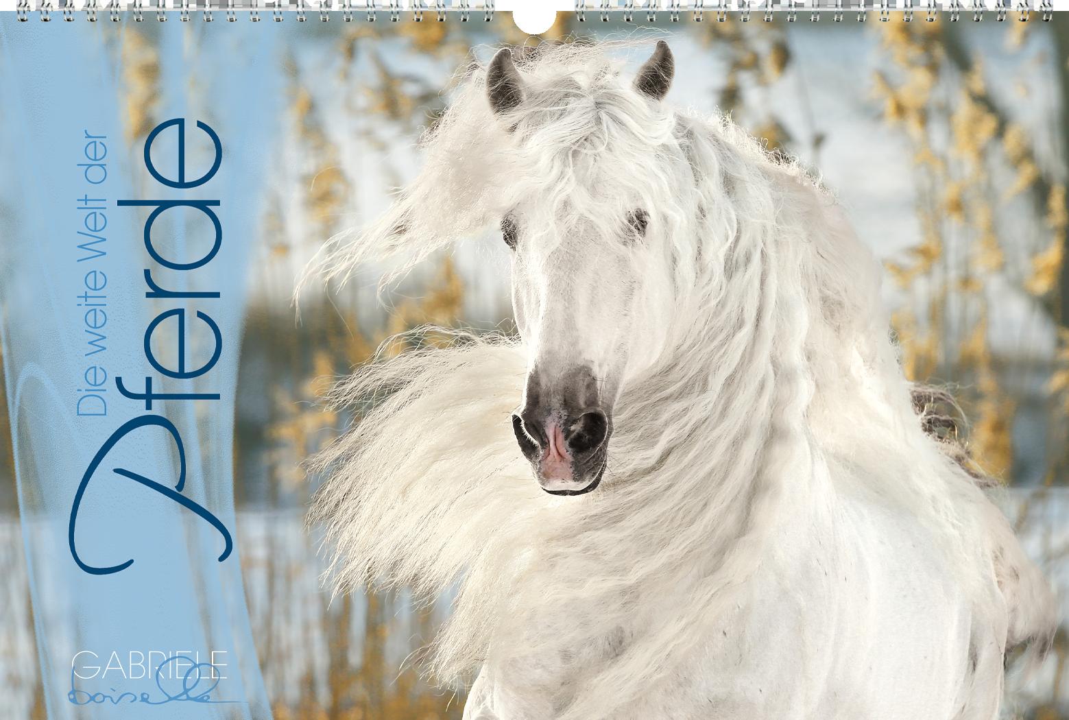 """""""Die weiter Welt der Pferde"""" Panoramakalender"""