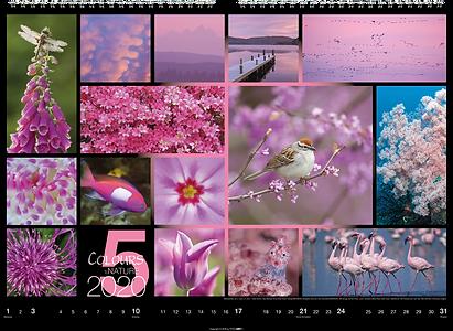 Kalendergestaltung, Colours of Nature 2020 Kalender, Weingarten, Werbeagentur r2 Mediendesign, Verden