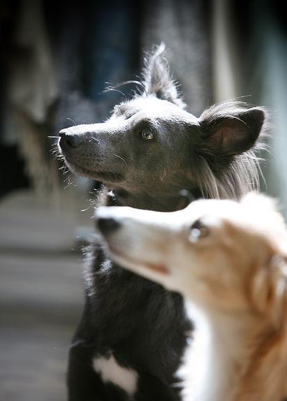 Fotografie, Tiere, Hunde, Werbeagentur r2 Ravenstein, Verden