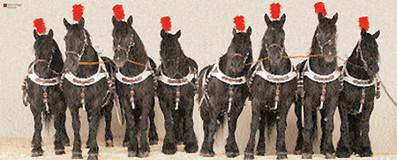 Buch - Pferde im Fotostudio - Edition Boiselle
