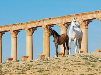 Araberstute mit Fohlen in der antiken Stadt Palmyra, Syrien