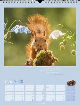 Kalendergestaltung, Eichhörnchen 2020 Kalender, Weingarten, Werbeagentur r2 Mediendesign, Verden