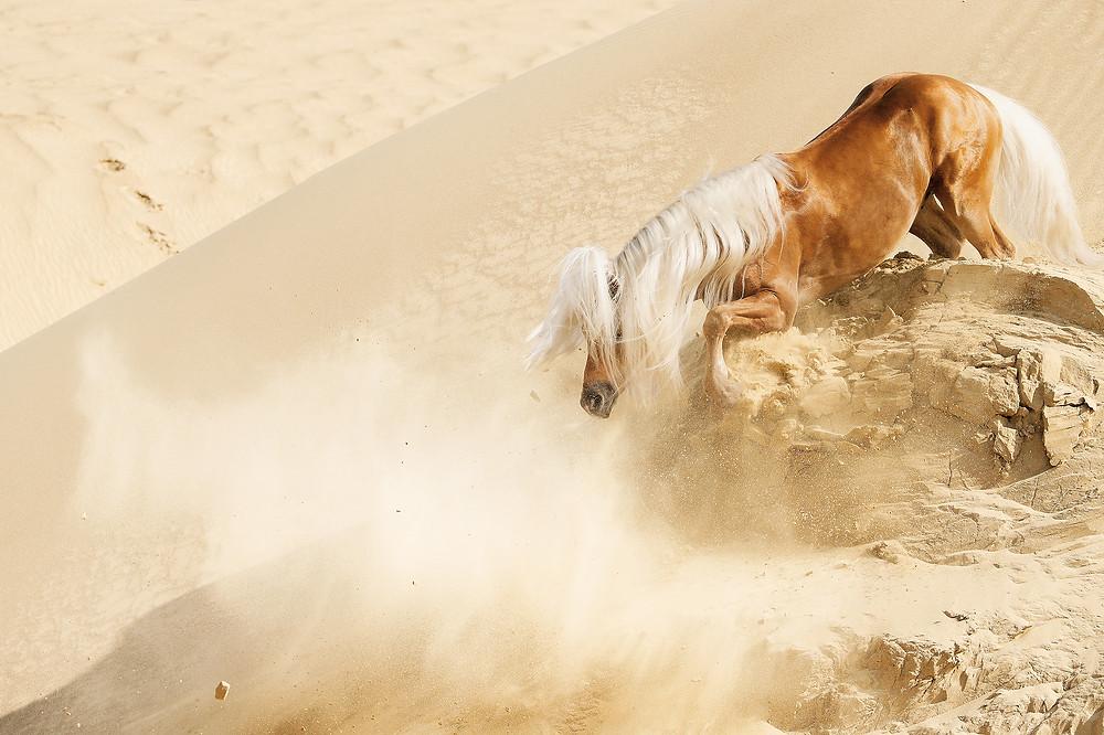 Fototipp Action in der Sandgrube