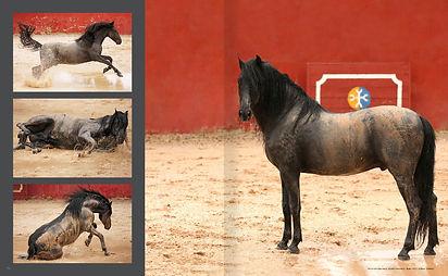Buchgestaltung, Die schönsten Pferde der Welt, Werbeagentur r2 Ravenstein, Verden