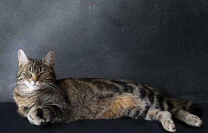 Fotografie, Tiere, Katze, Werbeagentur r2 Ravenstein, Verden