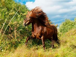 Bildergalerie Pferde der Mystischen Vulkaninsel