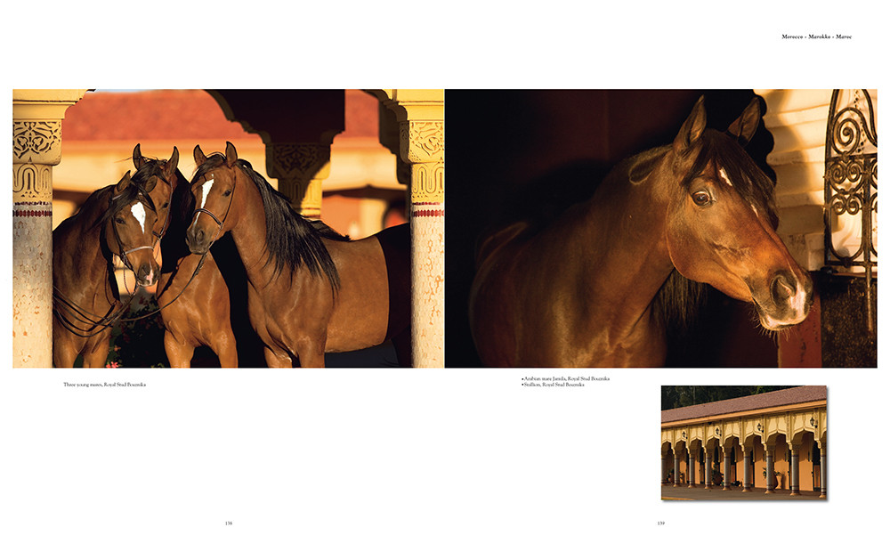 Buch - The Arabian Horses - Edition Boiselle