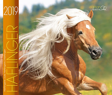Kalender Haflinger 2019