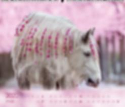 Kalendergestaltung, Pferdeliebe 2020 Kalender, Alexandra Evang, Edition Boiselle, Werbeagentur r2 Mediendesign, Verden