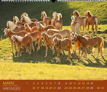 Kalendergestaltung, Haflinger 2020 Kalender, Edition Boiselle, Werbeagentur r2 Mediendesign, Verden