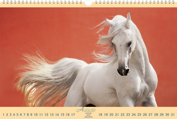 """Panoramakalender """"Die weite Welt der Pferde"""""""