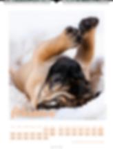 Kalendergestaltung, Mops 2020 Kalender, Weingarten, Werbeagentur r2 Mediendesign, Verden