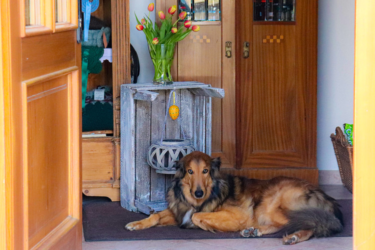 Dennhornshof Ferien mit Hund