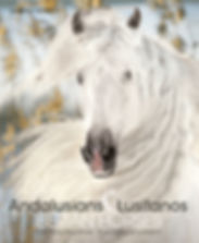 Buch Andalusians and Lusitanos