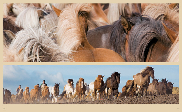 Buch - The World´s most beautiful Horses - Edition Boiselle