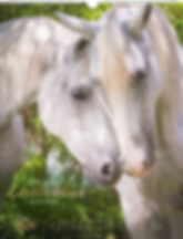 Kalendergestaltung, Die Anmut der Pferde 2020 Kalender, Christiane Slawik, Weingarten, Werbeagentur r2 Mediendesign, Verden