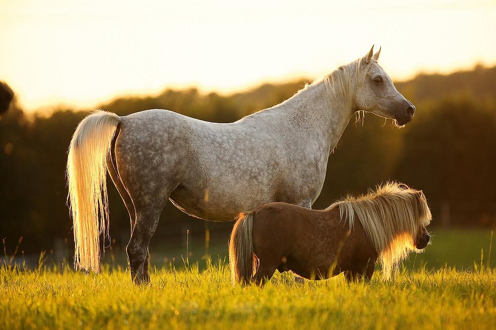 Bildgeschichte Groß & Klein – Eine echte Pferdefreundschaft