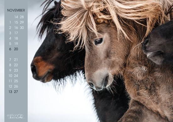 Kalender Pferdeliebe 202212.jpg