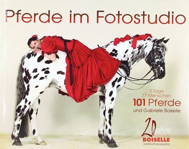 Pferde im Fotostudio