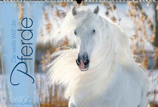 Panoramakalender, Die weite Welt der Pferde, Edition Boiselle