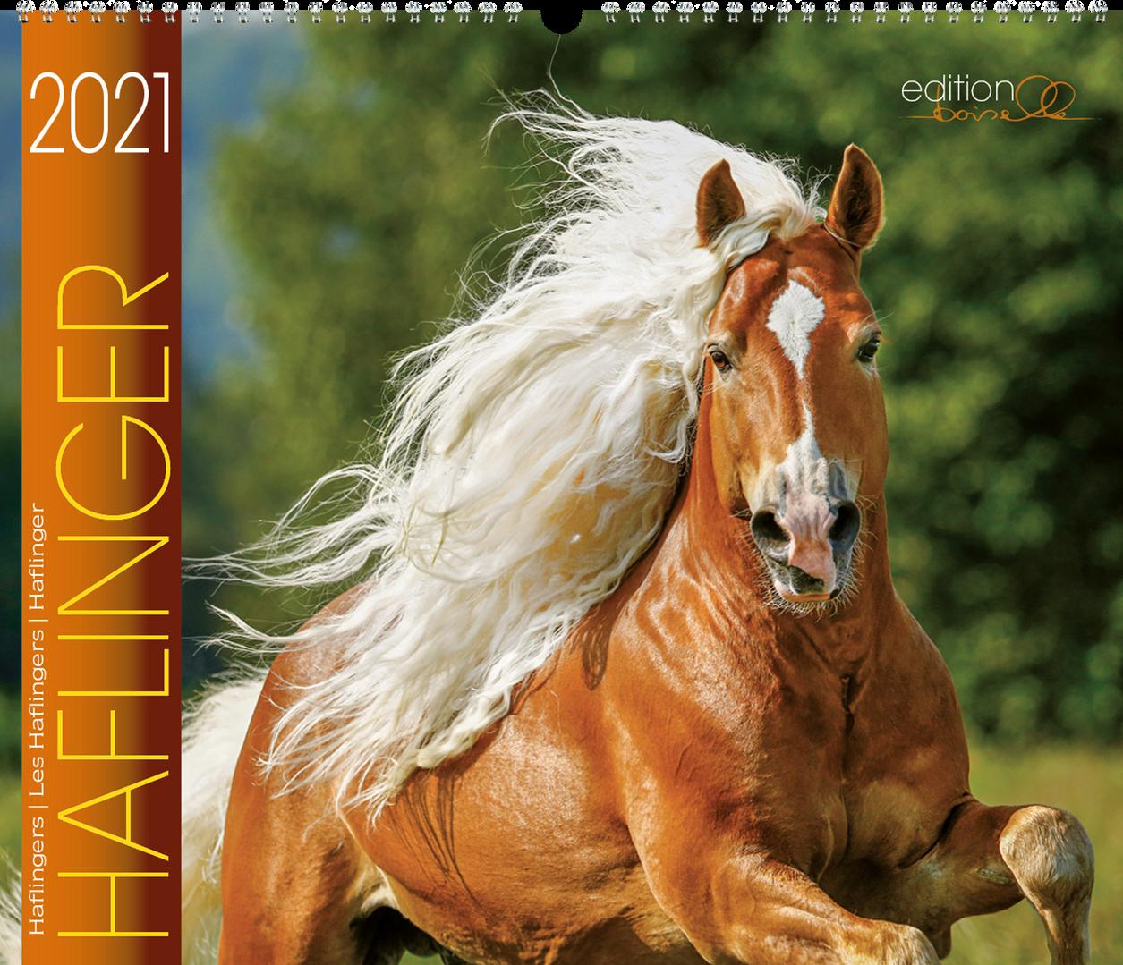 Kalender Haflinger 2020