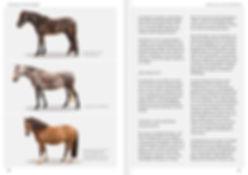 Buchgestaltung, Einmal Überbaut immer Überbaut, Exterieuranalyse und Tipps zum Pferdetraining, Barbara Welter-Böller, Claudia Weingand, Werbeagentur r2 Ravenstein, Verden