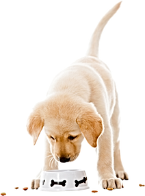 Puppy classes epsom