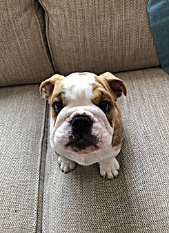 epsom paws puppy training