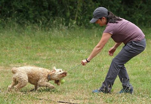 epsom paws dog training