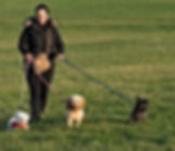 Epsom Surrey dog trainer and walker