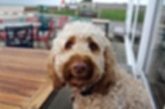 Epsom Surrey dog trainer and walker