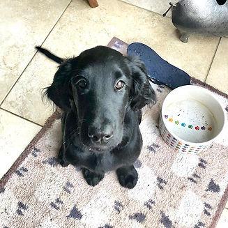 epsom paws surrey dog training online