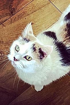 epsom paws cat feeding