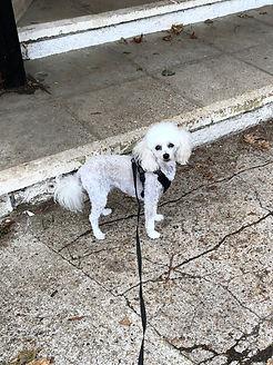 epsom paws dog walking