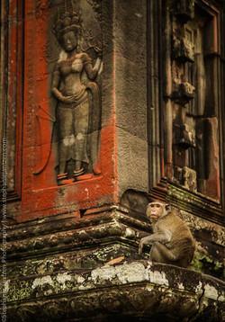 Angkor_site_stephanie_jantzen-4