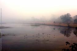 Inde-scenes_site_stephanie_jantzen-4