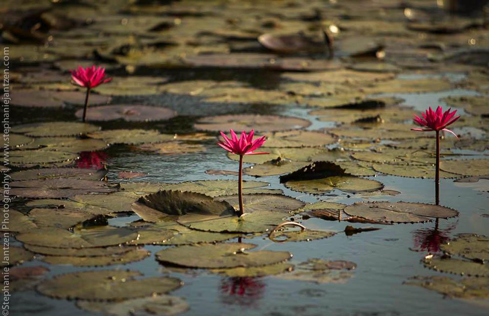 Angkor_site_stephanie_jantzen-21