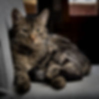 Kissa makaa