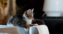 Kissa eläinlääkkärissä