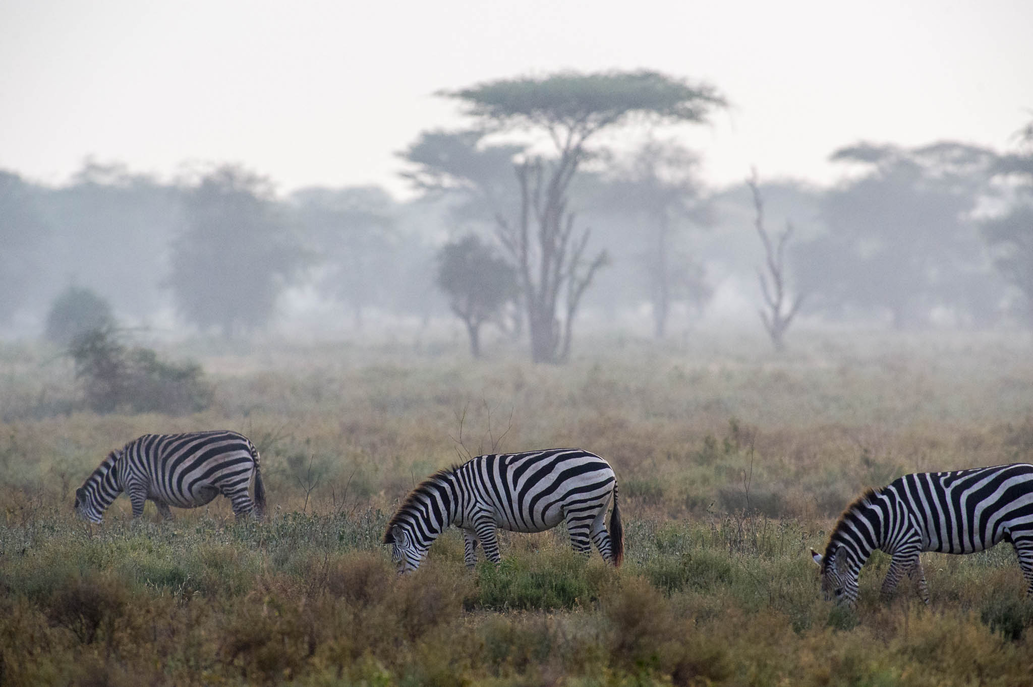 Morning at Ndutu