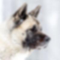 Eläinlääkärin koira Iita