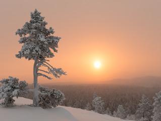 Yksinäisiä puita