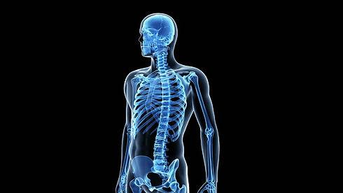 Sistema_Osteomuscular.jpg