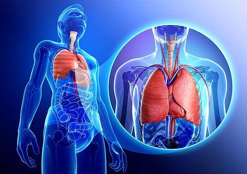 sistema-respiratorio.jpg